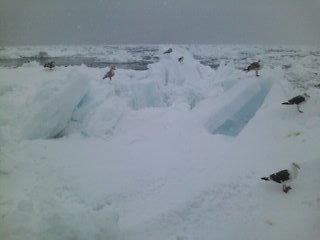 氷の世界へダイブ